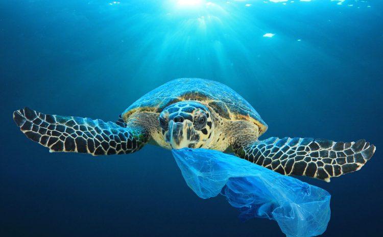 The final straw: Great British beach clean